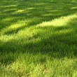 Grass with sunny spots — ストック写真