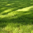 Grass with sunny spots - Stock Photo