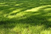Grass with sunny spots — Stock Photo