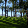 Stock Photo: Palm Springs