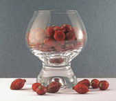 Berries of a dogrose in a glass on a dar — Stock Photo