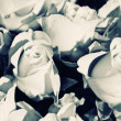 Background from white roses — Stock Photo