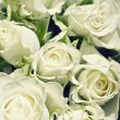Background from white roses with green l — Stock Photo #1588601
