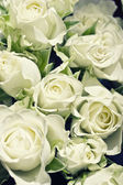 Background from white roses with green l — Stock Photo