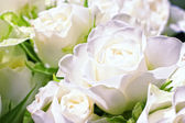 Flowers of white roses — Stock Photo