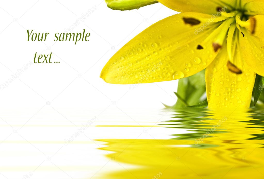 Congratulatory card whise Flower of a yellow lily  — Stock Photo #1587298