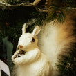 White squirrel in fur-tree branches - Stock Photo