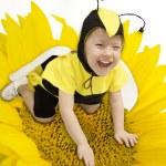 Honey Bee — Stock Photo