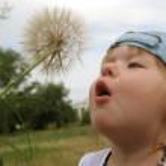 Little girl blowing dandelion seeds — Stock Photo