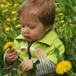 Child with the dandelion — Stock Photo
