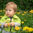 Stock Photo: Child with the dandelion