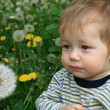 Child with the dandelion — Stock Photo #1624863