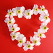 Romantic heart from narcissus — Stock Photo