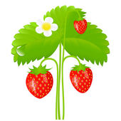 Strawberry — Stock Vector