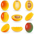 Royalty-Free Stock Vector Image: Mango