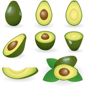Aguacate — Vector de stock