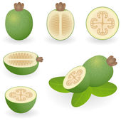 Feijoa — Stock Vector