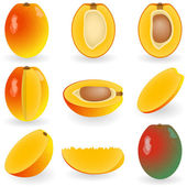 Mango — Stock Vector
