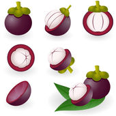 Mangosteen — Stock Vector