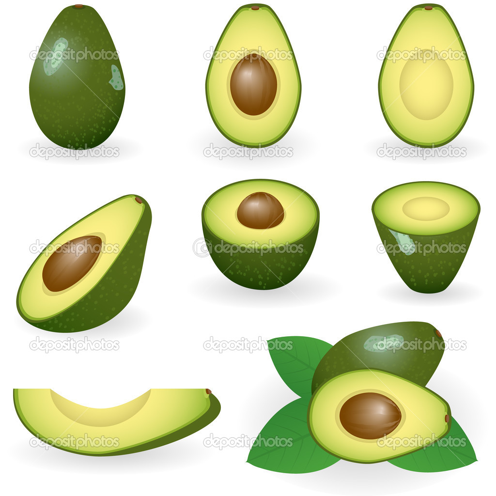 Vector illustration of avocado  Stockvectorbeeld #1643403
