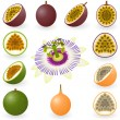 Stock Vector: Passion fruit