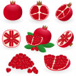 Stock Vector: Pomegranate