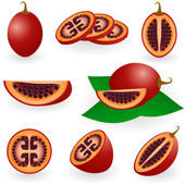 Tamarillo — Stock Vector