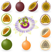 Passion fruit — Vector de stock