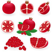 Pomegranate — Stockvector