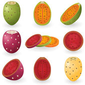 Prickly pear — Vector de stock