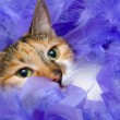 Cat in feathers — Stock Photo