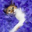 Cat in feathers — Stock Photo #1651063