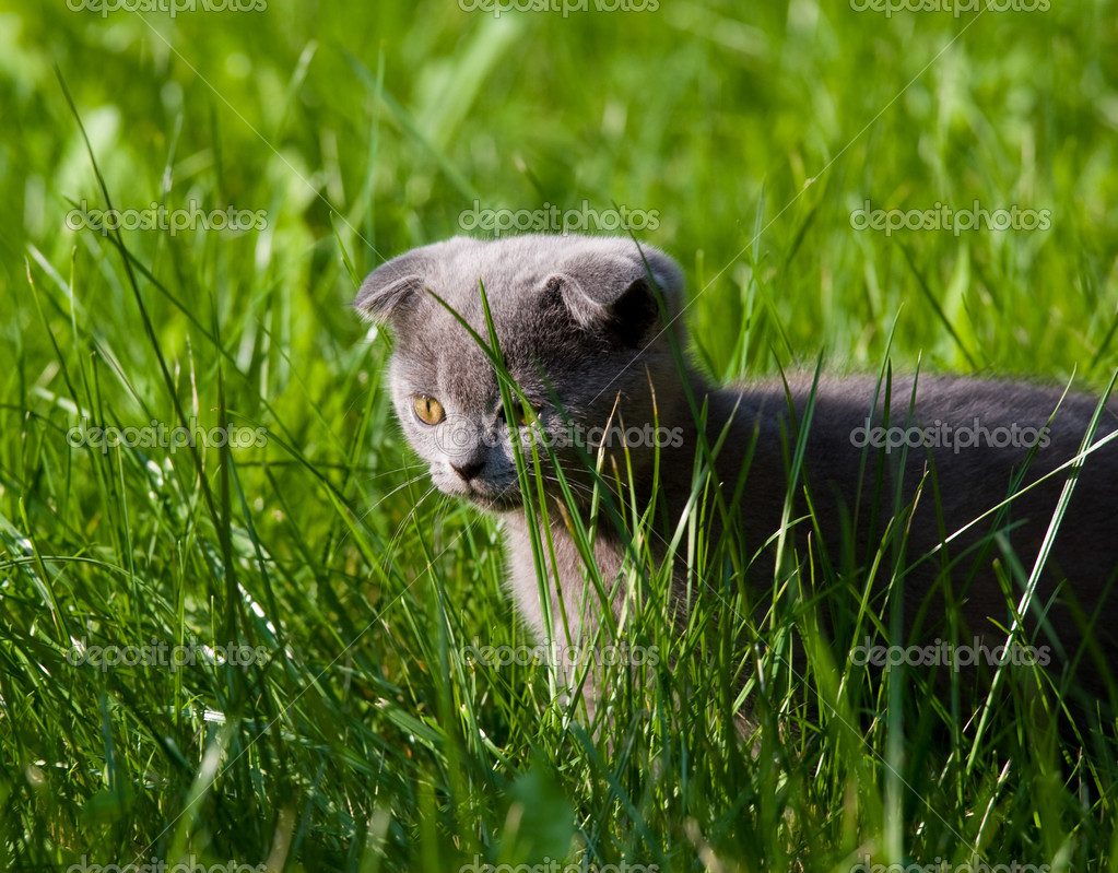 Little kitten playing on the grass close up — Stock Photo #1834278