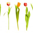Bouquet of spring yellow tulips — Stock Photo