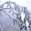 Frozen branch — Stockfoto #2583552