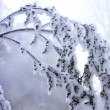 Foto Stock: Frozen branch