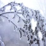 Frozen branch — Stock Photo