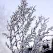 Frozen branch — Stock Photo