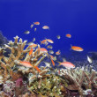 Stock Photo: Underwater world