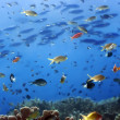 Underwater landscape — Stock Photo #1593677