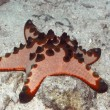 Red starfish — Stock Photo #1594231