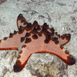 Royalty-Free Stock Photo: Red starfish