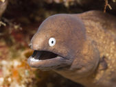 Moray — Stock Photo