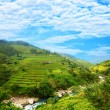 Rice field terraces - Stock Photo