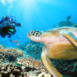 Stock Photo: Green turtle underwater