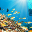 Fishes and diver - Stock Photo
