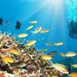 vissen en duiker — Stockfoto