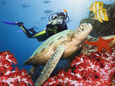 Tartaruga-verde debaixo d'água — Foto Stock