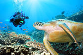 Green turtle underwater — Stock Photo