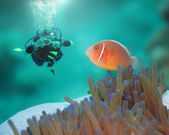 Pink clownfish and diver — Stock Photo